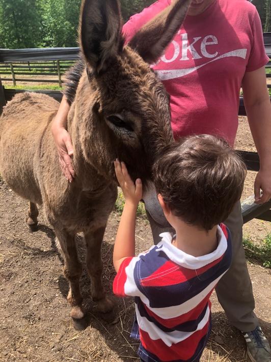 donkey and a little boy