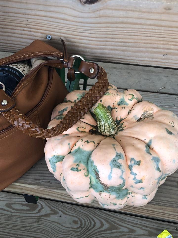 rare pumpkin